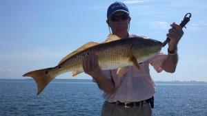 Pensacola Fishing Charter 19 300x169 Gag Grouper